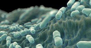 Foodelphi.com listeria bakteri