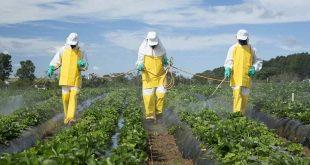 pestisit kalıntı