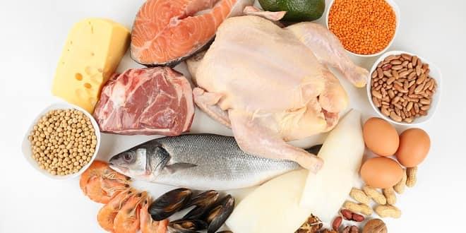 Foodelphi.com protein proteinler